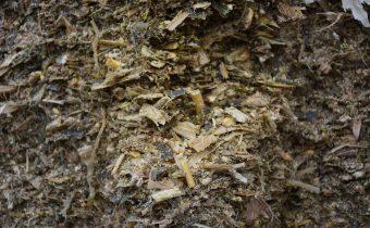 SILÁŽE – hodnotenie živinovej a fermentačnej kvality