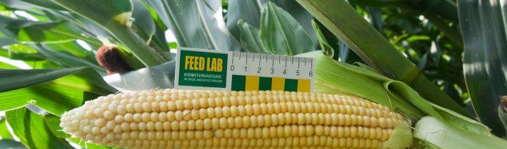 Drahé chyby pri silážovaní kukurice